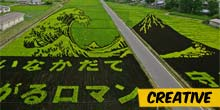 Japanese farmers use rice fields to express their art
