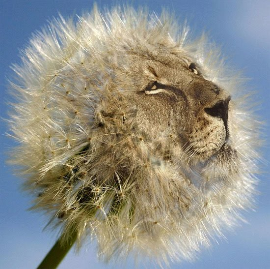 lionflower
