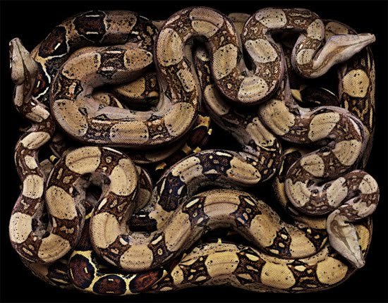 python The Most Dangres Snakes In The World