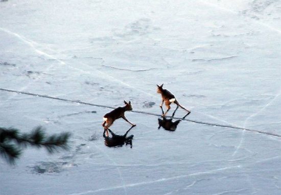 Here is the real bambi on ice 2019 this blog rules - Bambi on ice images ...