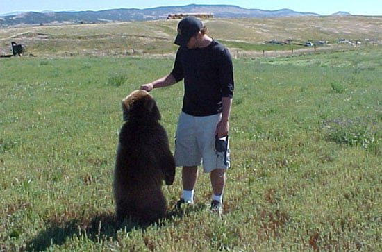 living with a bear