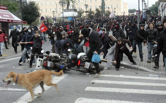 dog-at-clashes