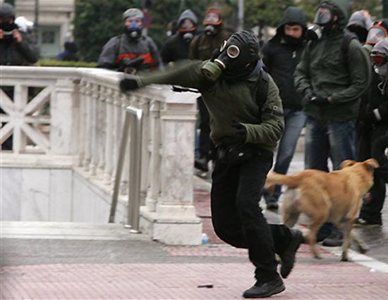 the riot dog