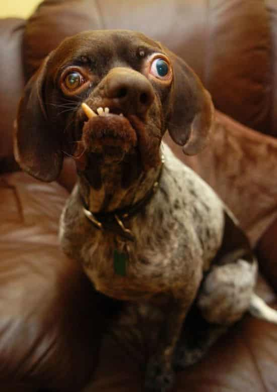 Ugly looking dogs - photo#12