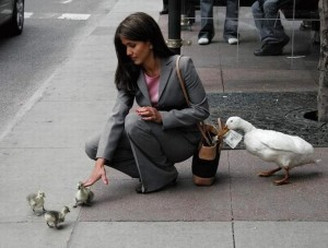 Pickpocket-Duck