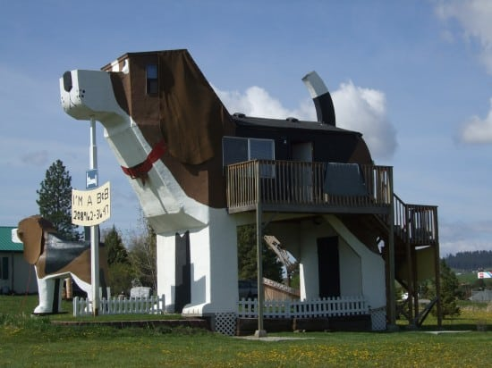 Bizarre Dog Hotel