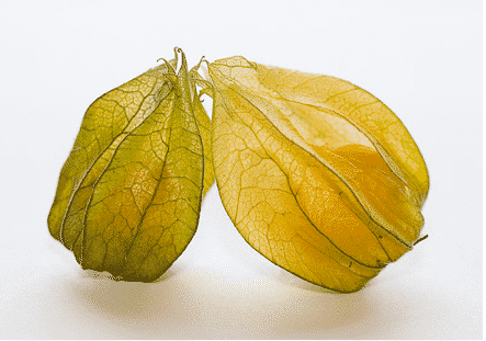 Bizarre Fruits and The Physalis