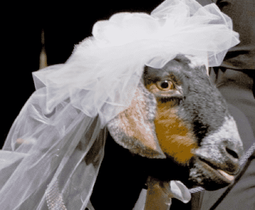 Most Unlikely Weddings in the World