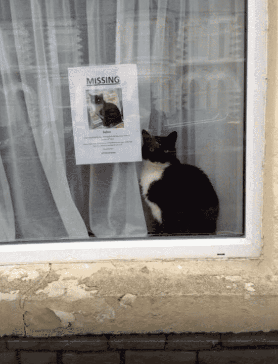 Best Missing Pets Signs