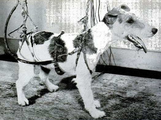 8 Psychological Experiments Conducted on Animals3