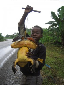 Bizarre Animals That Could Give You Nightmares