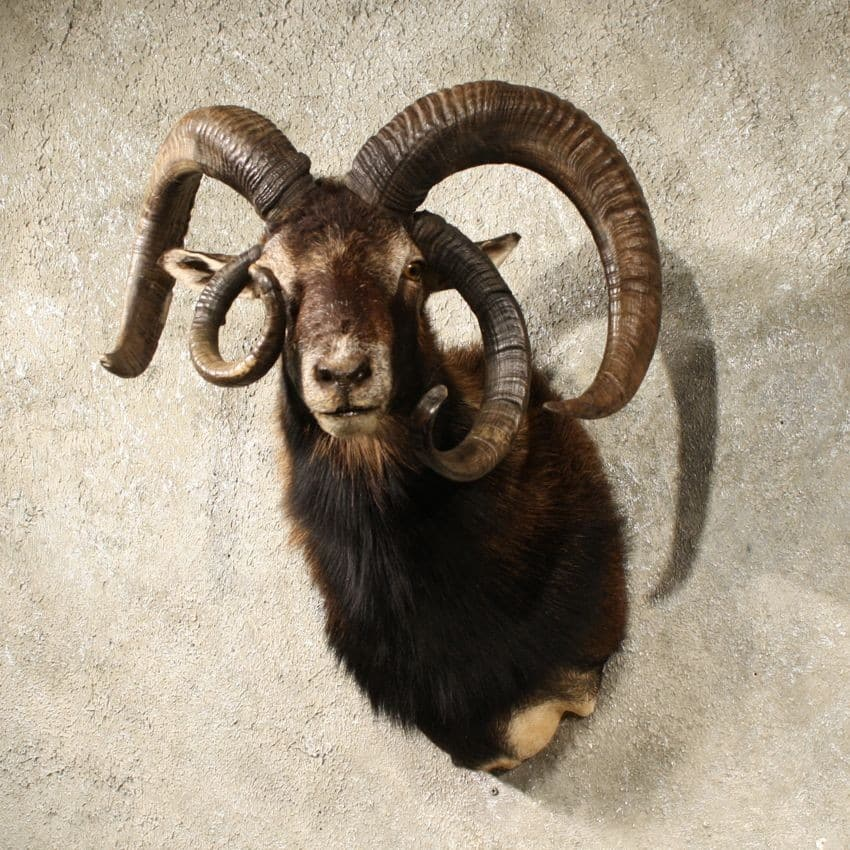 Tales of Demons and Gods chapter 6  Horned Sheep Hunter