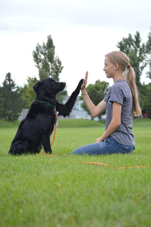 Unique Commands You Can Teach Your Dog