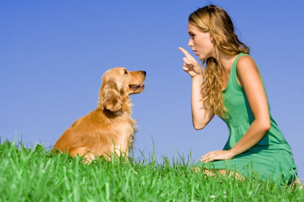 Top Five Dog Training Tips From The Dog Whisperer