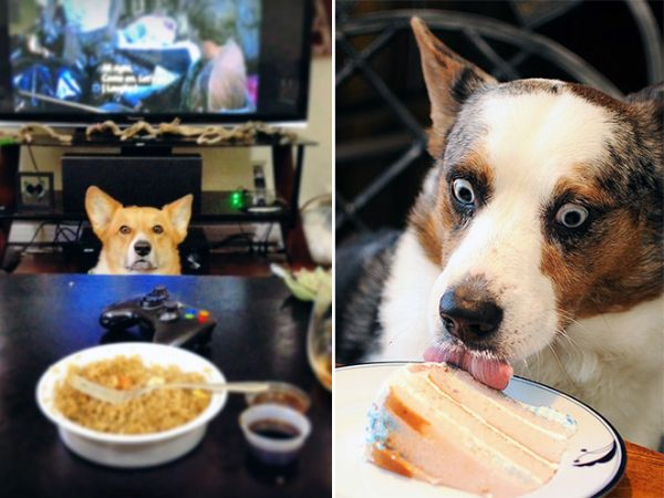 Sweet Tooth - Facts About Dogs And Food
