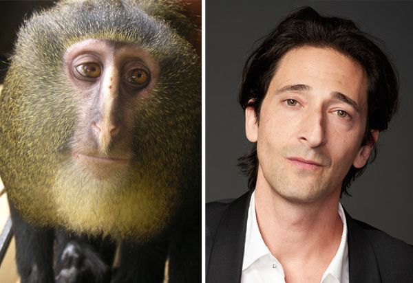 Celebrity Lookalikes - Adrien Brody