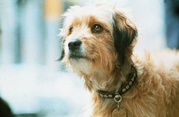 Benji - Most Famous Dogs Of All Time