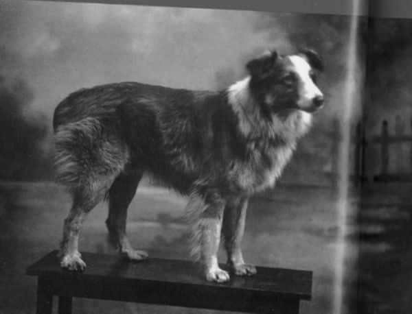 Bobbie - Most Famous Dogs Of All Time